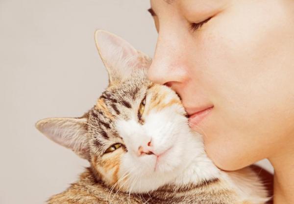 gato meigo